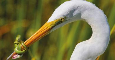 foto-incredibile-uccello-1